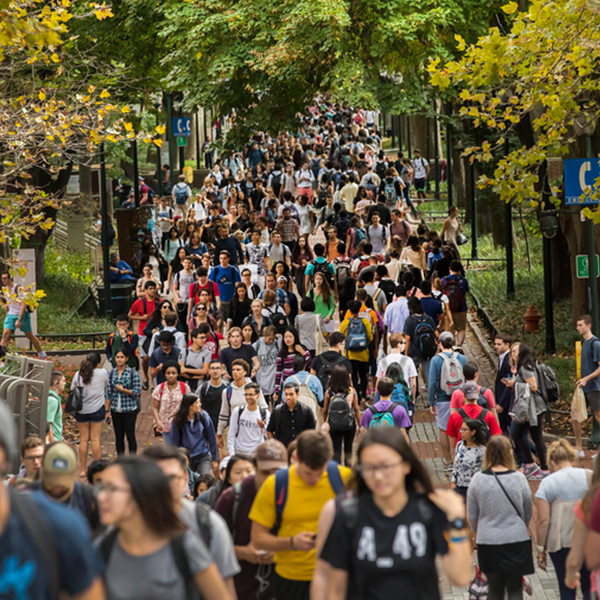 Students walk along Locust Walk